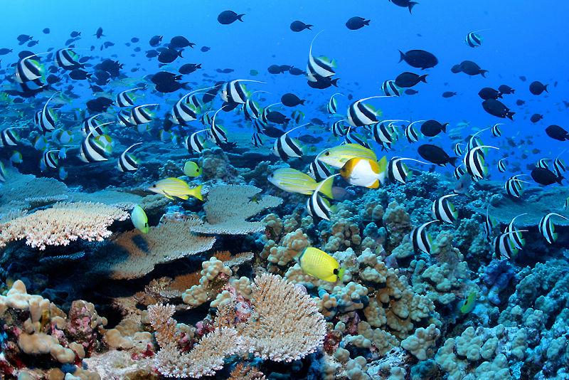 Snorkelling Fish.jpg